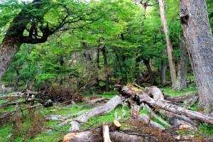 bosque-1140x639